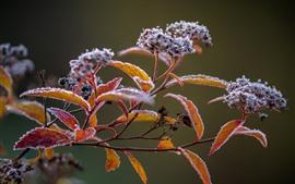 壁紙のプレビュー 小枝、葉、霜、冬