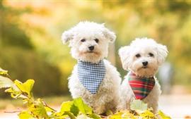 Dos perros blancos, hojas verdes