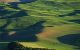 Preview wallpaper USA, Palouse, beautiful wheat fields, green, hills