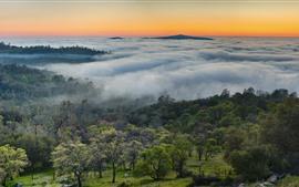 Aperçu fond d'écran USA, montagnes, brouillard, arbres, matin, paysage naturel