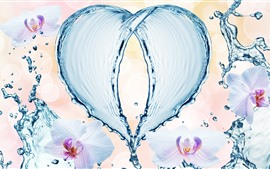 Water splash love heart, orchids