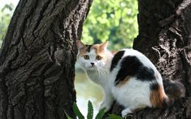 Gato blanco mirar hacia atrás, árbol