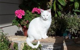 미리보기 배경 화면 흰 고양이, 햇빛, 꽃