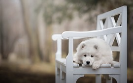 Cão branco, cadeira branca