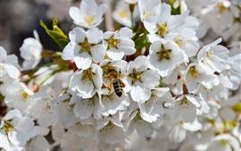 Flores blancas, abeja, primavera.