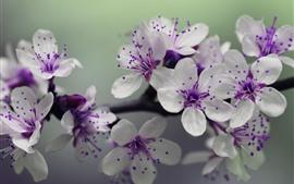 Flores brancas, pistilo roxo