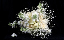 Preview wallpaper White flowers, roses, black background