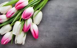 Pétalos de rosa blanco tulipanes, fondo gris
