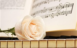 White rose, piano keys, music score