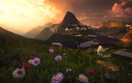 Flores silvestres, montanhas, cabras, nascer do sol, nuvens
