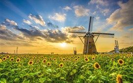 Windmill, sunflowers, sunset, clouds