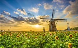 Aperçu fond d'écran Moulin à vent, tournesols, coucher de soleil, nuages