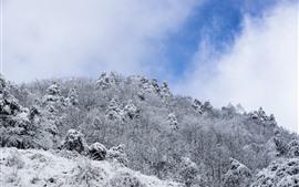 Inverno, neve, árvores, céu, nuvens brancas