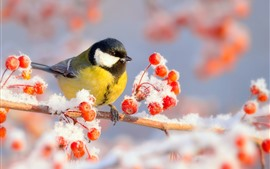 Winter, tit, bird, red berries, snow