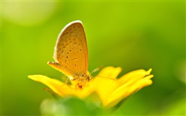 Yellow flower, butterfly, green background