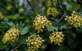 壁紙のプレビュー 黄色の小さな花、葉、小枝
