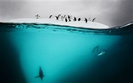 Antarctic, penguins, underwater, snow