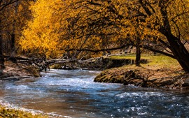 Preview wallpaper Autumn, creek, water, trees, yellow leaves