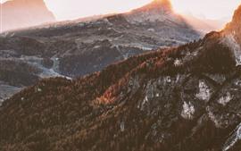 Outono, árvores, montanhas, nevoeiro, nascer do sol, manhã