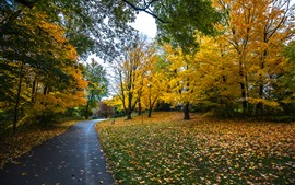 Autumn, trees, yellow leaves, footpath, park