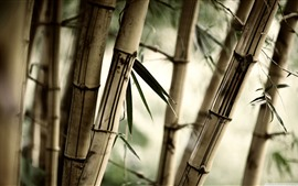 Preview wallpaper Bamboo, leaves, hazy