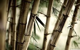 Bambú, hojas, brujería