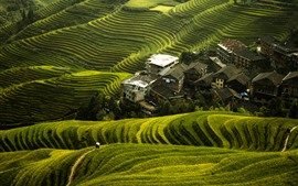 Preview wallpaper Beautiful Longji rice terraces, village, Guilin, China