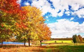 壁紙のプレビュー 美しい秋、木、黄色の葉、白い雲