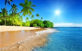 Preview wallpaper Beautiful beach, palm trees, sea, sunshine, tropical scenery