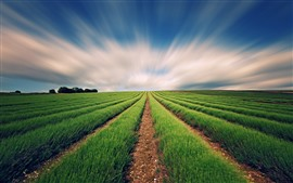 Красивые зеленые поля, солнечные лучи
