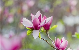 Preview wallpaper Beautiful pink rhododendron bloom, spring