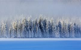 Hermoso invierno, nieve, árboles, lago, azul, Kanas, China