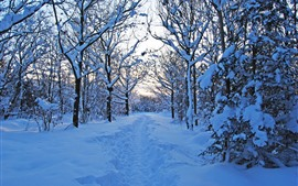 Inverno bonito, neve espessa, árvores