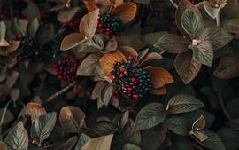 Bagas, folhas, plantas