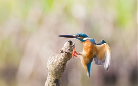 Preview wallpaper Bird, kingfisher, flight, wings, hazy background