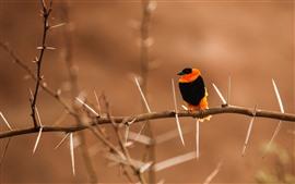 Pássaro, galho, espinhos