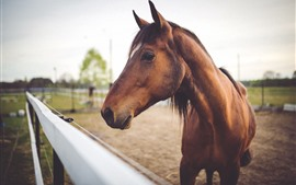 Preview wallpaper Brown horse, face, head, fence