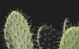 Preview wallpaper Cactus, needles, black background