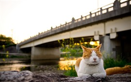 Preview wallpaper Cat sleeping, bridge