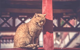 Gato, bajo el sol, descanso, valla.