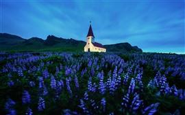 Igreja, lavanda, flores roxas, montanhas, crepúsculo