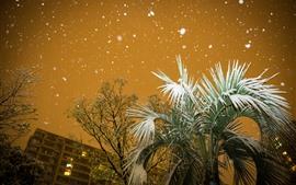 Ciudad, palmera, hojas, nieve, invierno, noche