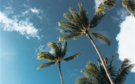 Coconut trees, sky, clouds