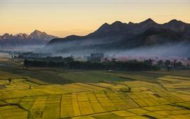 Campagne, champs dorés, montagnes, brouillard, matin