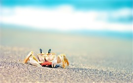 Preview wallpaper Crab, sands, beach, hazy background