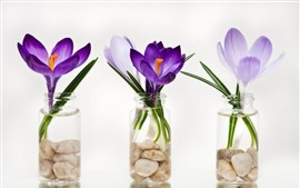 Preview wallpaper Crocuses, three bottles