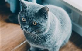 壁紙のプレビュー かわいい灰色の猫、光