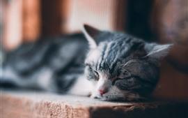 Gatito lindo en dormir