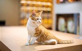 Lindo gatito mira hacia atrás, escritorio