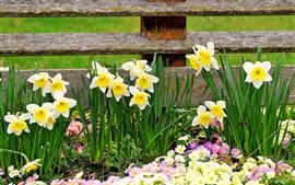 壁紙のプレビュー 水仙、フェンス、春